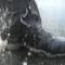 バスフィッシングオススメの靴
