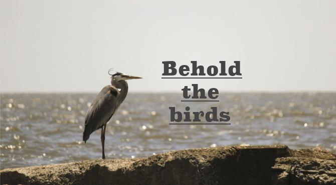鳥を見よ!!意外とみんな知らない、鳥がバスの居場所を教えてくれる!
