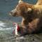熊が鮭を食べる
